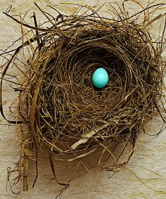 Fragile  This nest and robin's egg were found on separate occasions in my yard.   The egg was unbroken, on the ground, nowhere near a tree.   The nest isn't a robin's, but I don't know who it belonged to.