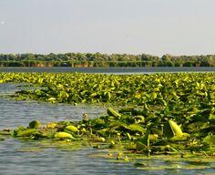 Un loc unic in lume: Delta Dunarii