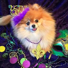 The princess herself wishing everyone a Happy Mardi Gras! by monique_ginger