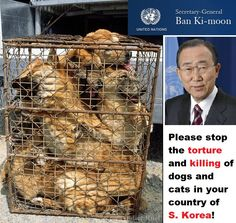 Dog and cat meat South Korea - this MUST be STOPPED!! This is no different than eating #children!