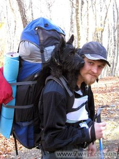 Carrying dog on the top of backpack. I have this breed and he would never do this. He has to be the lead.