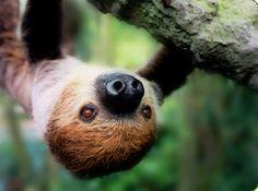 Salisbury Zoological Park   755 South Park Drive   PO Box 2979   Salisbury, MD 21802   Call Us: 410.548.3188