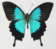 This image shows symmetrical balance because the image is the same on both sides. The butterfly's wings both have the same shape, color, and size.