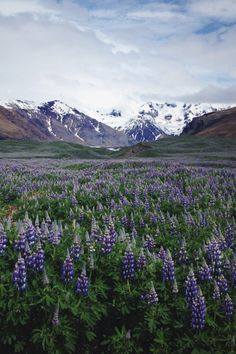 lvndscpe:  Iceland | by Laura Aziz