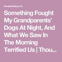 Something Fought My Grandparents' Dogs At Night, And What We Saw In The Morning Terrified Us | Thought Catalog