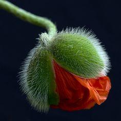 "(via 500px / Photo ""spring"" by Incadro Incadro)"
