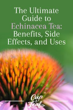The Ultimate Guide to Echinacea Tea: Benefits, Side Effects, and Uses – Cup & Leaf - echinacea benefits Matcha Tea Benefits, Coconut Benefits, Lemon Benefits, Health Benefits, Health Tips, Best Matcha Tea, Matcha Green Tea, Green Tea Before Bed, Home Remedies
