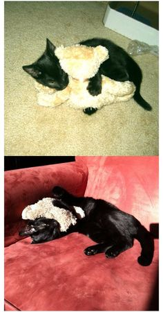 The Dodo - 23 Pets Who've Loved The Same Toy Since Forever