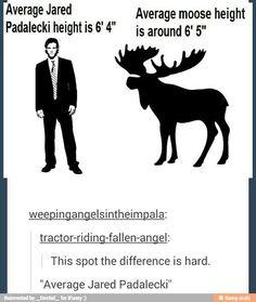 Moose :3