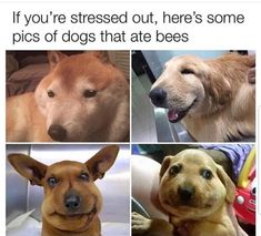20 Trending Funny & Cute Animal Pictures Of The Day 21 – 6 – 2018 Funny Dog Memes, Funny Animal Memes, Cute Funny Animals, Funny Cute, Funny Dogs, Pet Memes, Silly Jokes, Super Funny, Cute Animal Pictures