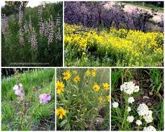 Wildflowers in Utah