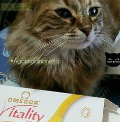 Acidi grassi omega 3 gatto omega 6 gli Omega-3 EPA DHA i gatti e i cani non hanno gli enzimi sufficienti per convertire ALA in EPA se acquistiamo pet-food