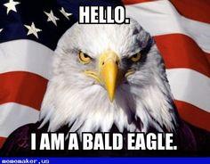 Awesome Meme in http://mememaker.us: Hello eagle.