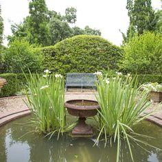 Do you plant #iris in or around your water garden? #joy #mossmountainfarm #vanbloem #watergarden #sharethebounty