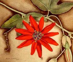 Seeking Beauty - Art Links: Rita Angus New Zealand New Zealand Art, Pastel Pencils, Watercolor Paintings, Watercolour, Painting Gallery, Passion Flower, Make It Work, Beauty Art, Botanical Art