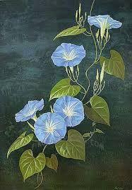 Картинки по запросу Heavenly Blue Morning Glory Watercolor