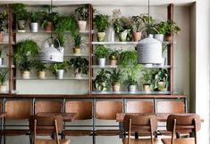 Piante da interno al centro dell'arredo di un ristorante - Elle Decor Italia