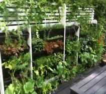 Vertical Allotments - Edible Walls - Wall Mounted Gardens - Living Walls