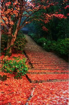 stairs workout, then jumping in the leaves...check