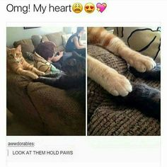 Funny pictures about Cats Showing Some Love. Oh, and cool pics about Cats Showing Some Love. Also, Cats Showing Some Love photos. Cute Funny Animals, Funny Animal Pictures, Funny Cute, Cute Cats, I Love Cats, Crazy Cats, Animals And Pets, Baby Animals, Animal Memes