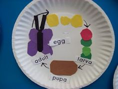 Life Cyle Ideas...could do as a craft with ant plant, animal, or insect.