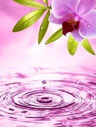 Water drops and orchid…