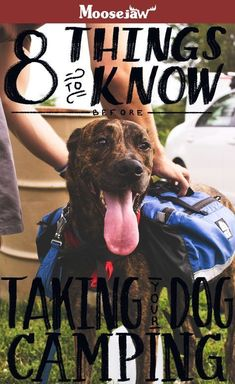 Hiking and camping with your dog can be tricky but rewarding. We put together a comprehensive article about the dos and donts of hiking with your pupper along with things to bring and the stuff you can leave home. Visit Us Camping And Hiking, Family Camping, Tent Camping, Outdoor Camping, Camping Gear, Hiking Gear, Camping With A Dog, First Time Camping, Camping Style