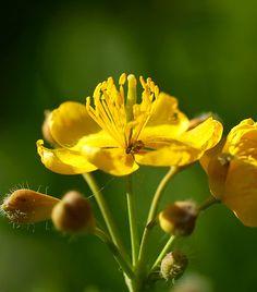 Íme, a legerősebb baktérium- és vírusölő növények | femina.hu Nature, Plants, Food, Naturaleza, Eten, Planters, Nature Illustration, Outdoors, Meals