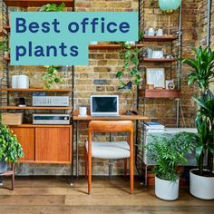 Discover a wide-range of plants that are perfect for the desk, kitchen or reception area. Indoor plants are popular with office design because of the benefits they bring to reducing stress and improving employee productivity. Indoor Office Plants, Best Office Plants, Best Indoor Plants, Free Plants, Cool Plants, Indoor Watering Can, Lucky Bamboo Plants, Jasmine Plant, Stone Plant