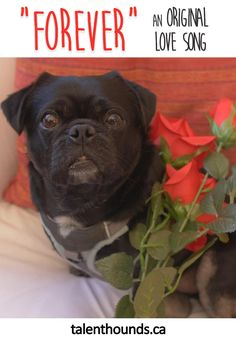 Enjoy our original love song and video tribute to rescue dogs past and present #rescuesrock