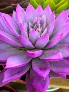 Plant souk, flowers, plants, gardens