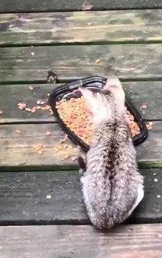 Cute Animal Videos, Cute Animal Pictures, Cute Little Animals, Cute Funny Animals, Funny Animal Memes, Funny Cats, Funny Memes, Gato Gif, Animal Antics