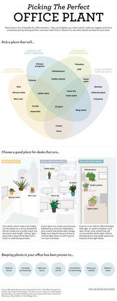 A planta ideal para seu escritório