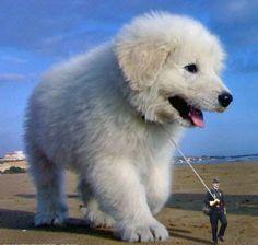 Big puppy! He's cute!