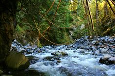 Spring runoff in Elip Creek in the Quinault Region of the Olympic National Park