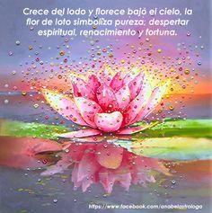 Crece del lodo y florece bajo el cielo, la flor de loto simboliza pureza, despertar espiritual, renacimiento y fortuna.