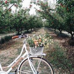 bike to the orchard