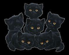 plaatje van zes zwarte katten