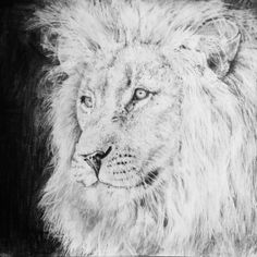 #draw #drawing #drawings #paint #painting #art #instadraw #animal #animals #wild #wilds #lion #pencil #paper #A3