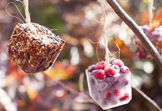 Why not take advantage of this cold weather and make a winter friendly craft that benefits the birds? These DIY ice cube birdfeeders are gorgeous!