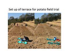 Setting up potato trials Photo Projects, Trials, Nepal, Terrace, Potatoes, Balcony, Patio, Potato, Decks