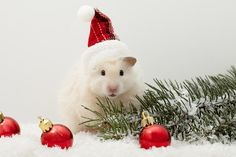 Happy Holidays From Pets Can Stay!