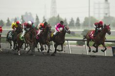Midnight Aria wins the Queen's Plate Camel, Plate, Horses, Queen, Animals, Dishes, Animales, Animaux, Horse