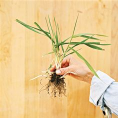 weed identification guide so you don't pull your plants instead - bhg - click through