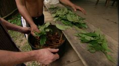 Psychedelic drug ayahuasca could be used to treat depression and PTSD but also carries risks