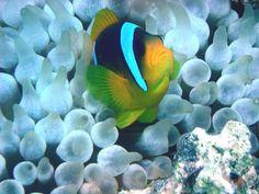 Diving in #egypt #travel