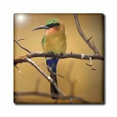 "Africa. Red-throated Bee Eater bird - NA02 AJE0239 - Adam Jones - 12 Inch Ceramic Tile by 3dRose. $22.99. Dimensions: 12"" H x 12"" W x 1/4"" D. Construction grade. Floor installation not recommended.. Clean with mild detergent. High gloss finish. Image applied to the top surface. Africa. Red-throated Bee Eater bird - NA02 AJE0239 - Adam Jones Tile is great for a backsplash, countertop or as an accent. This commercial quality construction grade tile has a high gloss finish. The ima..."