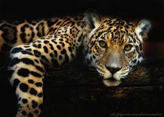 Spotness by jaguarov :)