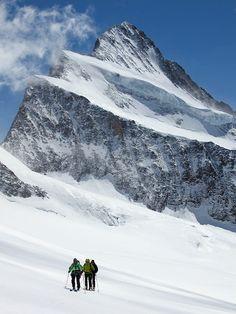 Finsteraarhorn (4,274 m), the highest mountain in the Bernese Alps