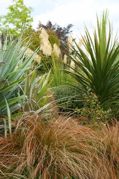 Tussock and Astelia chathamica 'Silver Spear' – Garden İdeas Outdoor Landscaping, Landscaping Plants, Outdoor Plants, Bush Garden, Ferns Garden, Steep Gardens, Back Gardens, Garden Ideas Nz, Garden Inspiration